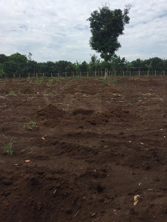 đất nông nghiệp xuân lộc