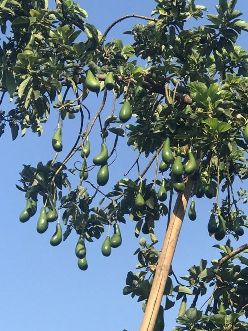 Bán Vườn Trái Cây Đẹp Tại Đồng Nai