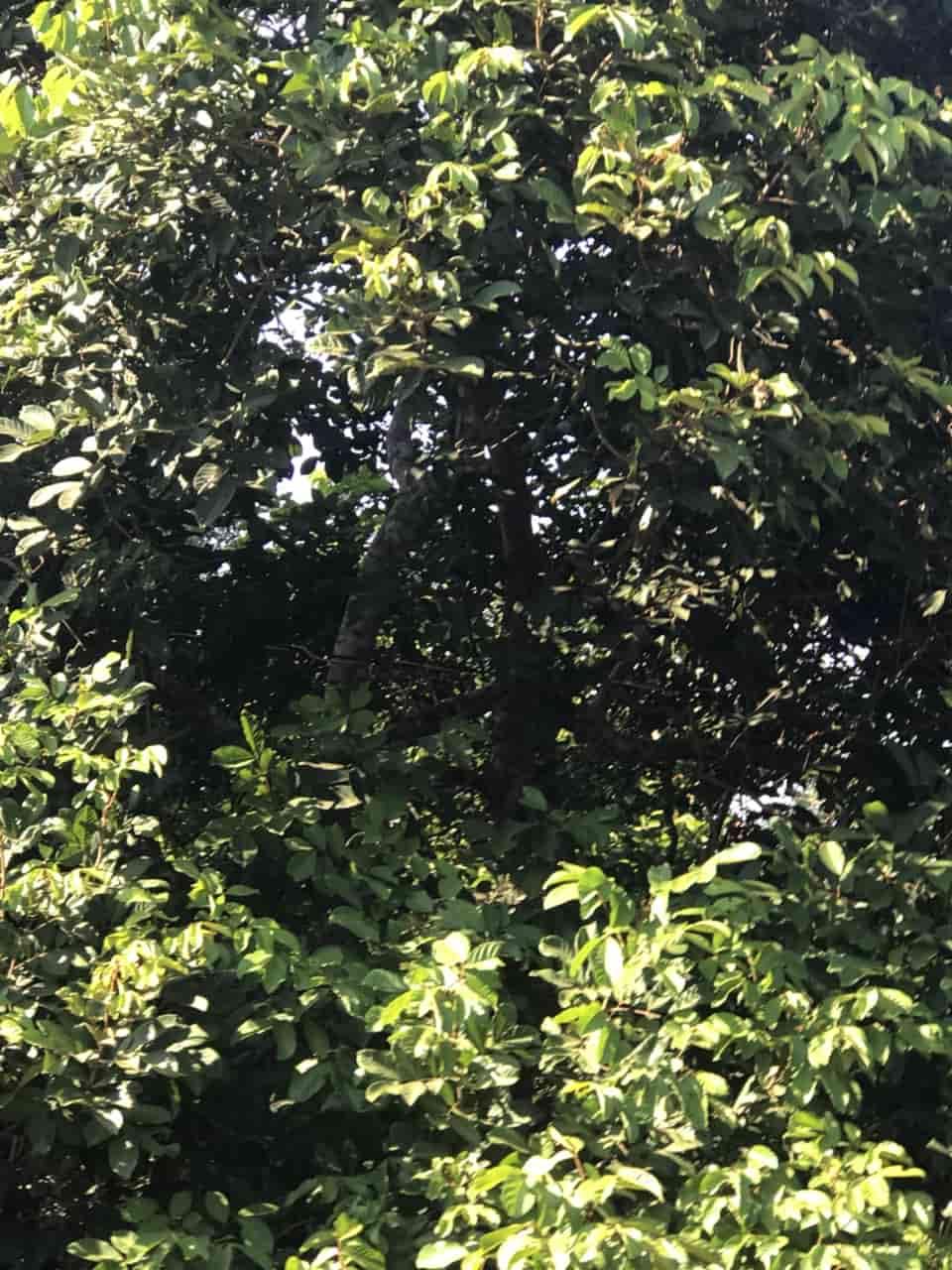 Cần Bán Mảnh Vườn Rộng 13611 m2 Tại Xã Xuân Tân Thị Xã Long Khánh
