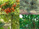 Bán Vườn Trái Cây Tại Thành Phố Long Khánh
